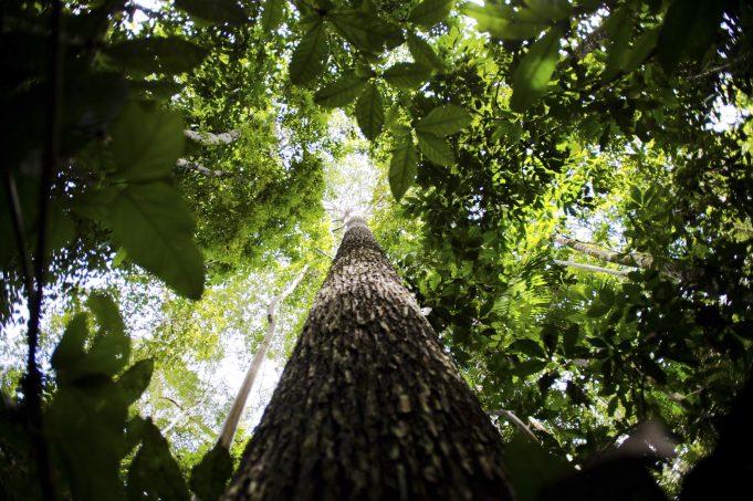 Rodada de negócios internacional do BCB Amazônia vende mais de US$ 27 milhões