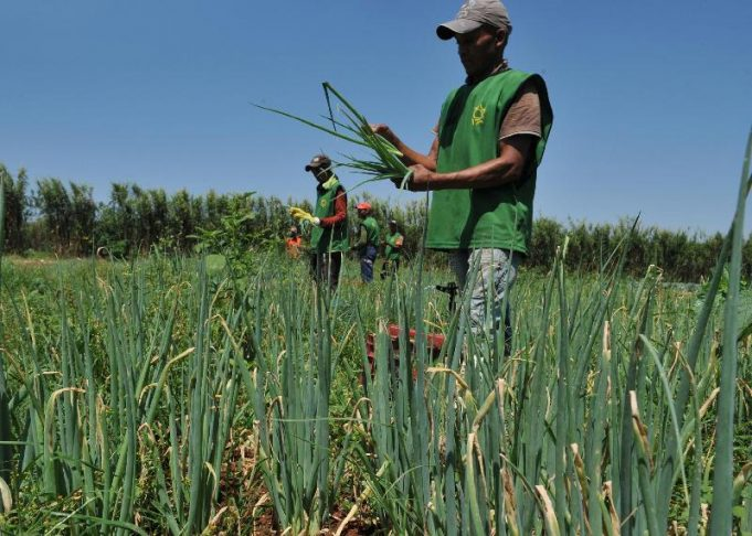 Agricultura familiar: Brasil assume presidência temporária de reuniões no Mercosul